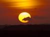 kraan-vogel-zons-ondergang-1024