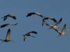 kraanvogels-00493-1024
