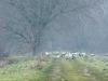 kraanvogels-09168_1024