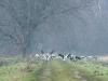 kraanvogels-09169_1024