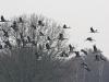 kraanvogels-09200-1024