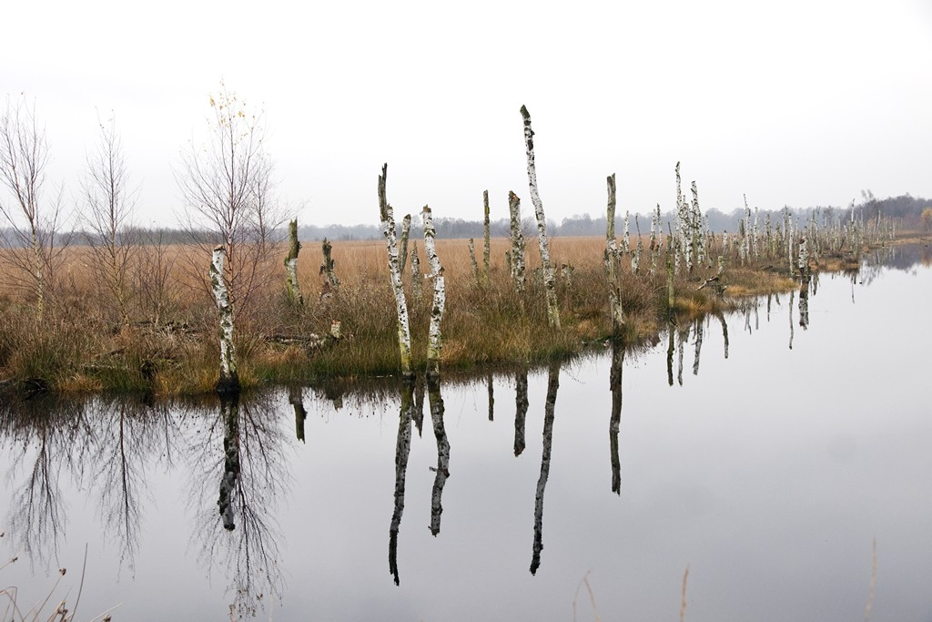 veen-landschap-09127-1024
