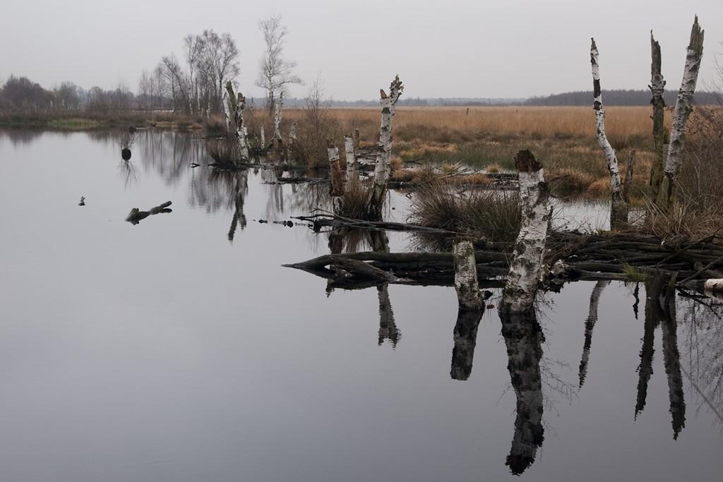 veen-landschap-09129-1024